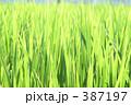 草原 387197