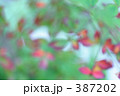 草木 緑 赤 387202