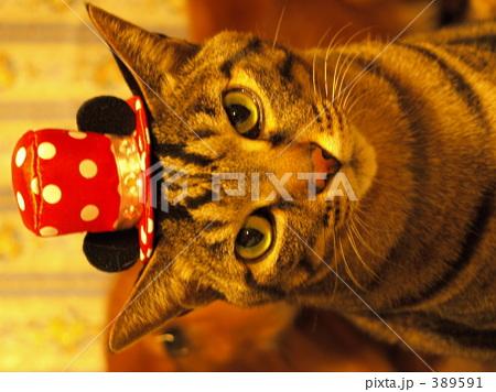 シルクハット猫の写真素材 [389591] - PIXTA