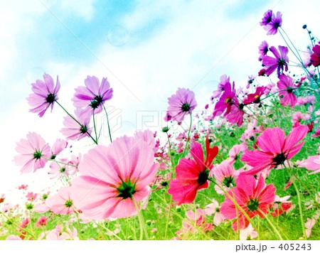 空色・花色・秋の風 405243