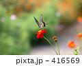 アゲハチョウ 416569