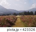 一本道 生駒高原 花の写真 423326