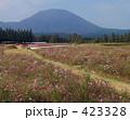 一本道 生駒高原 花の写真 423328