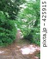 高尾山の一本道 林道 山道 425915