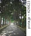木々 一本道 並木道の写真 426623