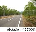 白樺林と道路 427005