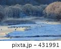タンチョウ 鶴居村 音羽橋の写真 431991