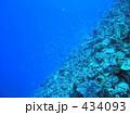 熱帯魚 海水魚 水中写真の写真 434093
