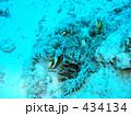 海水魚 水中写真 小魚の写真 434134
