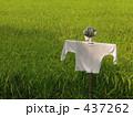 かかしと稲 437262