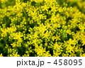 黄色の花 458095