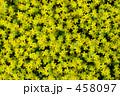 黄色の絨毯 458097