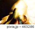 かぐや姫 463286