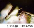 幻想 463290