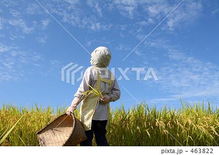 ワーク 農業 稲刈り 田んぼに立つ女性 3 463822