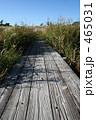 秋の散歩道 465031