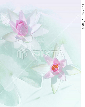 Water Lily. Ⅰ 472541