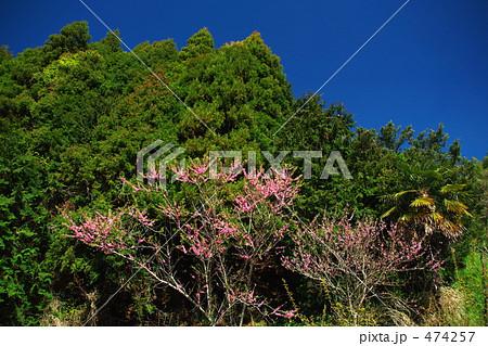 山と桜1 474257