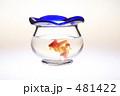 きんぎょ 金魚鉢 キンギョの写真 481422