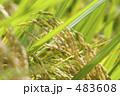 豊作 農作物 田んぼの写真 483608