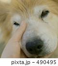 490495