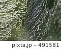 クモの巣 水玉 くもの巣の写真 491581