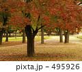 櫨 はぜ 樹木の写真 495926