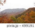 大山の紅葉 499191