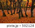 モミジ 落葉 紅葉の写真 502128