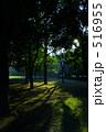 陽射し 木々 日差しの写真 516955