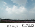 豊橋の空とコスモス 517882
