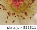 おしべ しべ 蘂の写真 522811