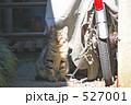 のらねこ 野良猫 ノラネコの写真 527001