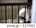 ノラネコ 野良猫 のらねこの写真 527002