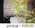 ノラネコ 黒猫 野良猫の写真 528193