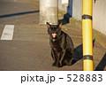 ネコ ノラ猫 のら猫の写真 528883