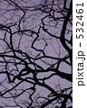 冬の木 532461