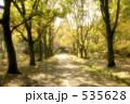 木陰 木々 一本道の写真 535628