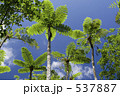 羊歯 樹木 ジャングルの写真 537887