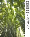 たけ タケ 竹の写真 538052