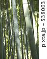 たけ タケ 竹の写真 538063