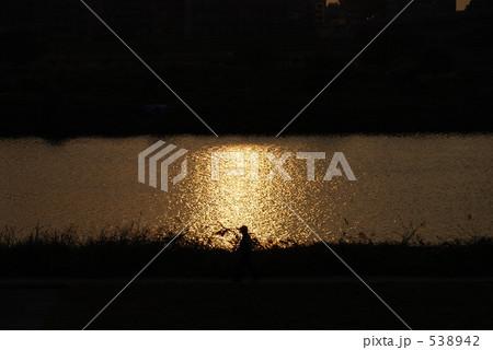 写真素材: 夕日に映える