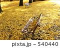 ベンチ 一面 イチョウの写真 540440