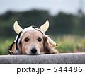 牛ダックス 544486