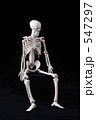 人体骨格 547297