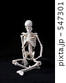 人体骨格 547301