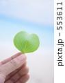 成長 エコ 発芽の写真 553611