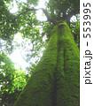 青葉 木々 緑の葉の写真 553995