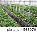 栽培 温室 ビニールハウスの写真 563070