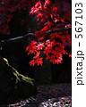 箱根 モミジ 紅葉の写真 567103